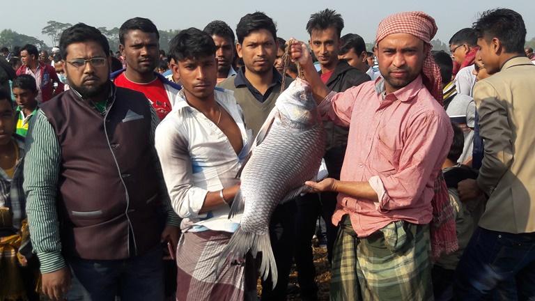 কালীগঞ্জে মাছের মেলায় জামাই-শ্বশুরের প্রতিযোগিতা