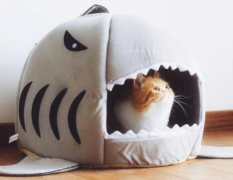 Sogni d'oro dentro la bocca dello squalo!