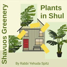 Adorning the Shul with Greenery on Shavuos: Part II