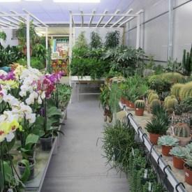 928_piante