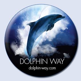 Beautiful Dolphin Footage