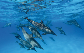 Ambient Music  – Ocean Dolphins Video