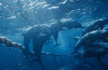Environmental groups decry WTO ruling on 'dolphin safe' tuna