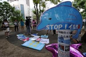 afp-dolphin-hunting-season-kicks-off-in-japan