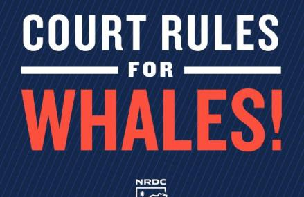 Court Rules US Navy War Games Violate Law Protecting Whales and Dolphins