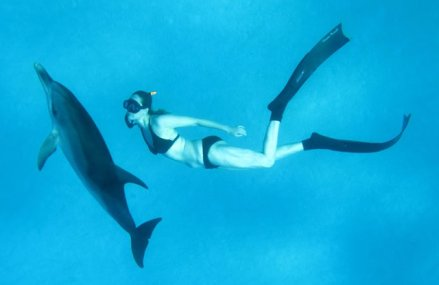 Dolphin Way reviewed on Go Freediving