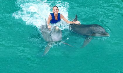 Check out these pictures to see a bottlenose, dusty, false killer whale dolphin and more. Swim With Dolphins In Dolphin Cove Cayman Dolphin Discovery