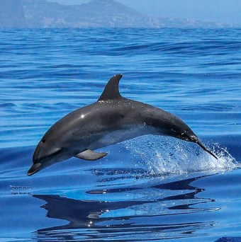Dolphin Facts   Dolphin Project