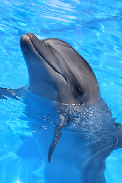 Interesting information about Bottlenose dolphins