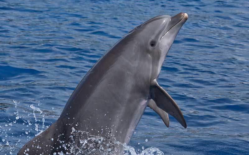 Image result for dolphin and human