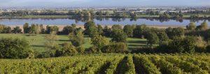 Vigne-Loire