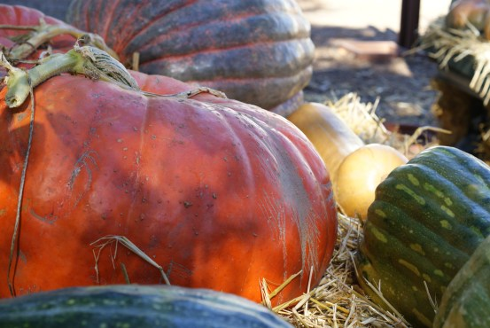 pumpkins and gourds and squashes, oh my!