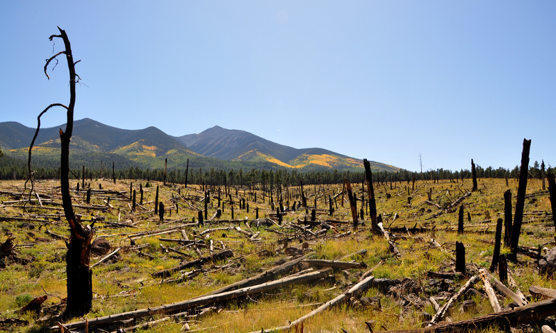 USDA Forest Service, Coconino National Forest, Burnt trees (CC BY-SA 2.0)