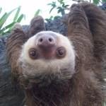 Toward a Spirituality of Sloths