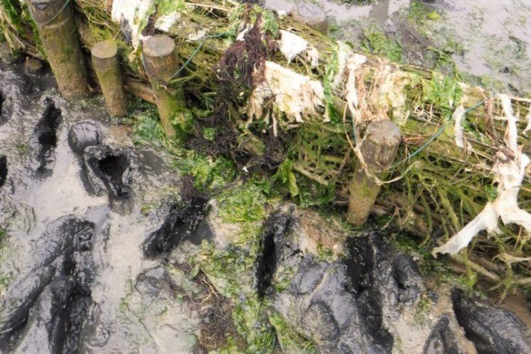 Wadden Sea - Mudflat Hiking