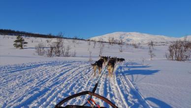 Tromso Husky