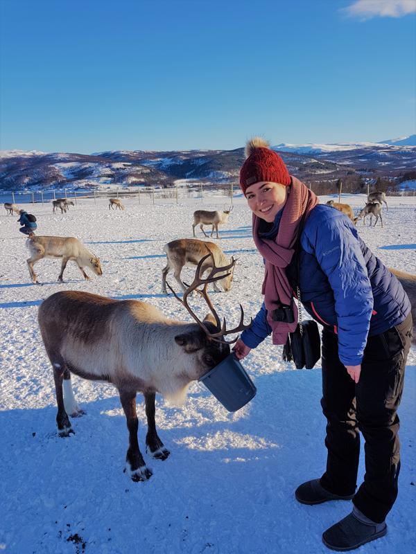 Tromso Reindeer