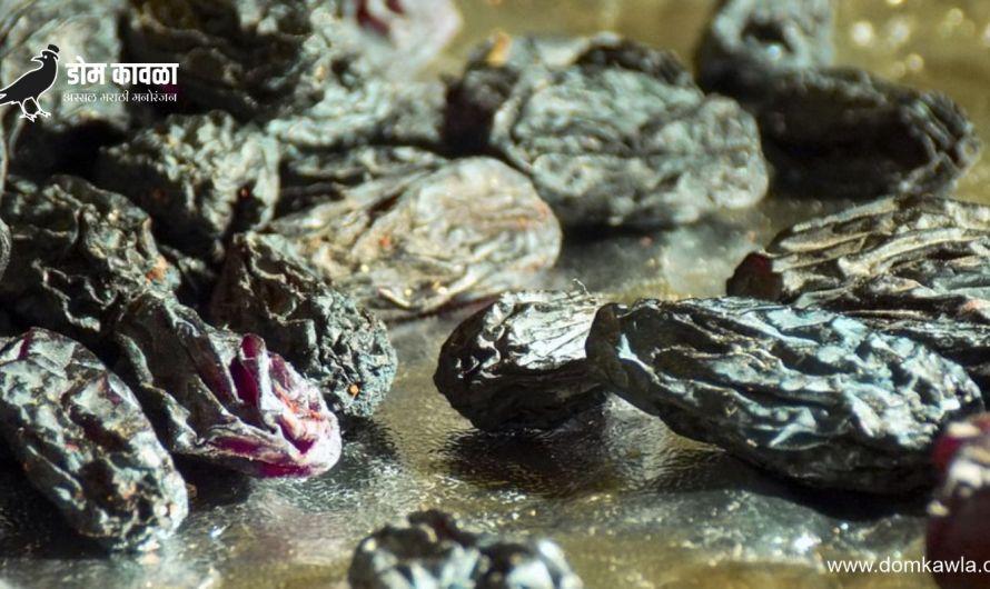 Benefits Of Black Raisins काळे मनुके खा आणि या आजरांपासून दूर रहा