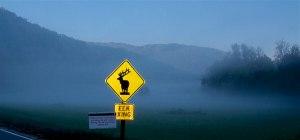 Elk-Crossing-Great-Smokey-Mountain