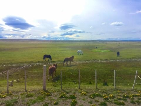 Puerto-Natales-Chile-Patagonia-DomOnTheGo 3