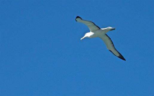 Dunedin-NewZealand-DomOnTheGo 37