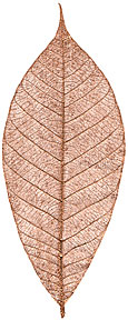 """Rubber Tree -- 3"""" - Copper"""