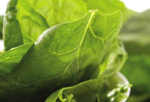 Spinach can boost the immune system