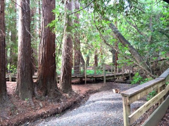 Redwood Grove Preserve