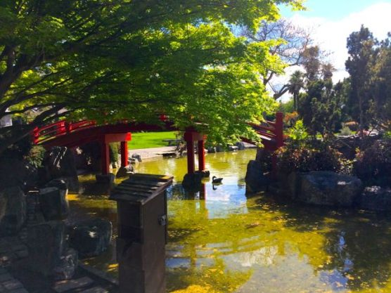 A bridge over a koi pond.