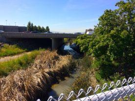 Calabazas Creek as it flows under the Hwy 237 bridge.