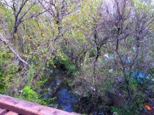Looking down on Coyote Creek and The Jungle from an abandoned railroad bridge.