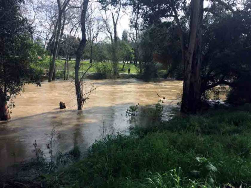 Coyote Creek at flood stage