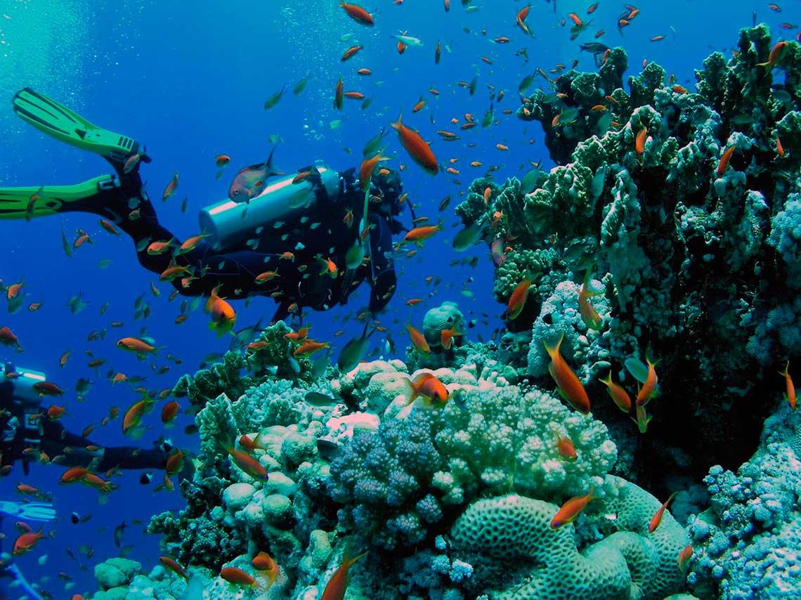 arrecifes de coral en mexico para bucear