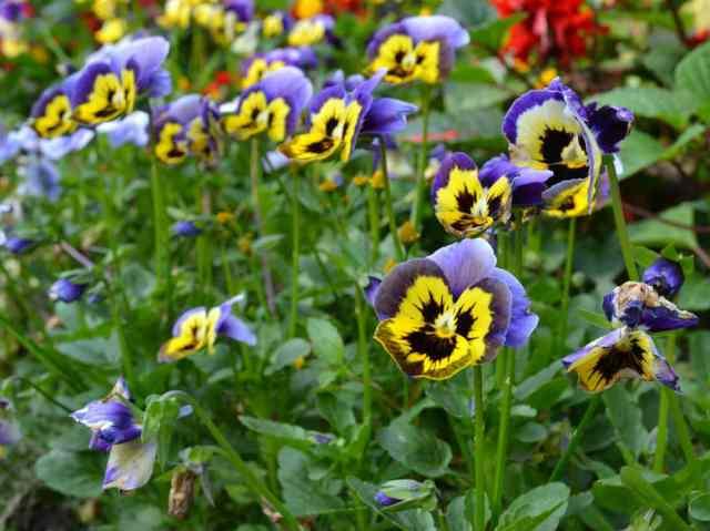 1er Festival de Flores de Primavera exposiciones y venta