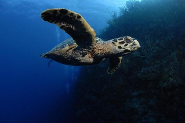 Buceo en Islas Caimán