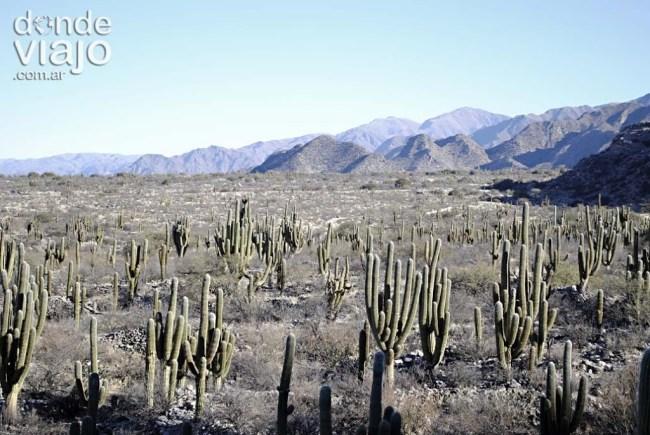 Vista desde ruinas de Quilmes