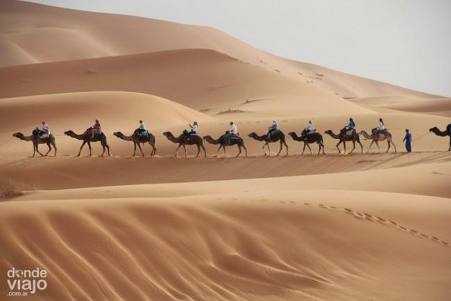Caravana de camellos en Sahara