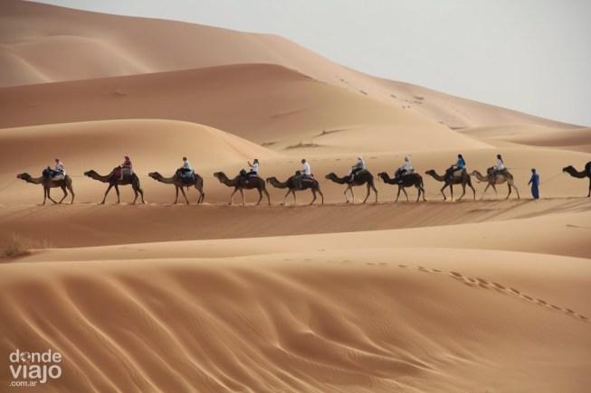 Caravana de camellos en el Sahara de África
