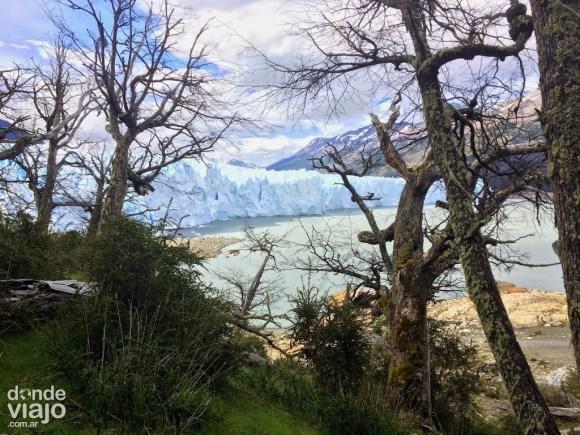 También se realiza una caminata por el bosque frente al Glaciar