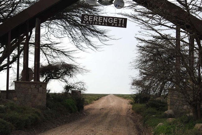 Safari por el Parque Serengeti