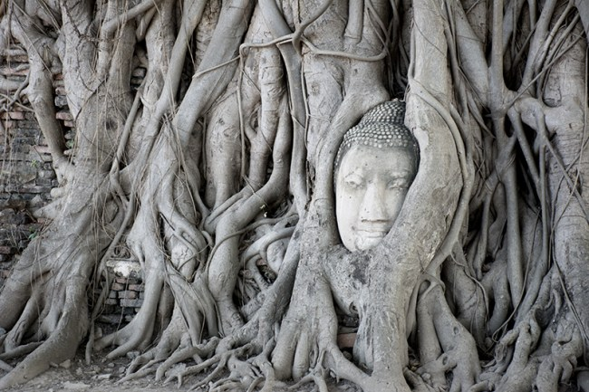 Cabeza buda Wat Mahathat