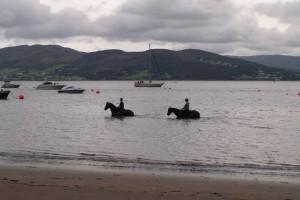 Horses in the water at Rathmullan Beach