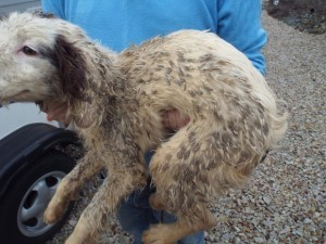 The dogs were found in a poor state.