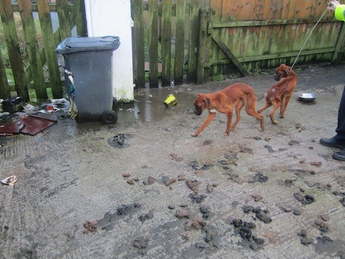 The two dogs left in squalid conditions at the house in Raphoe.