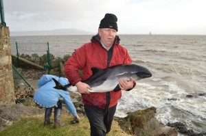 Mr Craig with the porpoise. Pic Trish Murphy