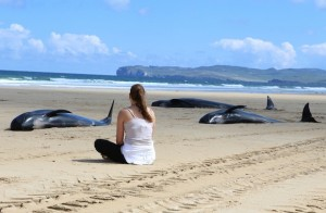 Austrian woman Antonia Leifner watches agonisingly as the 5 pilot whales slowly die on the beach at Ballyness Bay, Falcarragh, Co. Donega.  (North West Newspix)