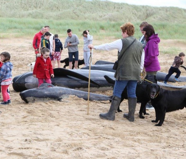 Hundreds of people posed with and touched the dead whales yesterday. Pic copyright nwnewspix
