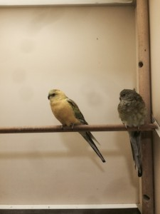 The parrots are back together again.