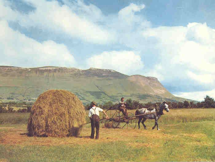 Working in the fields of north Sligo in 1959