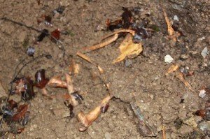 Some of the bones which were found.